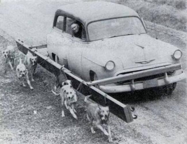 37-Walk-the-Dogs-81581-63391.jpeg