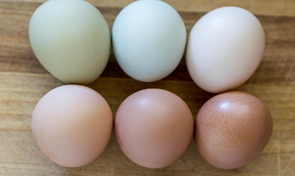 Colorful Chicken Eggs.jpg