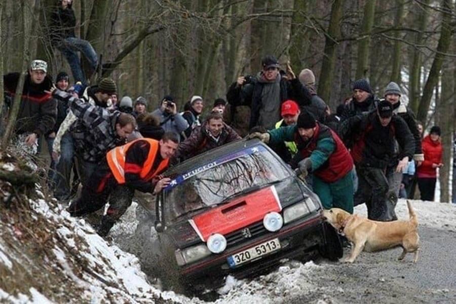 Dogs Humans 3.jpg