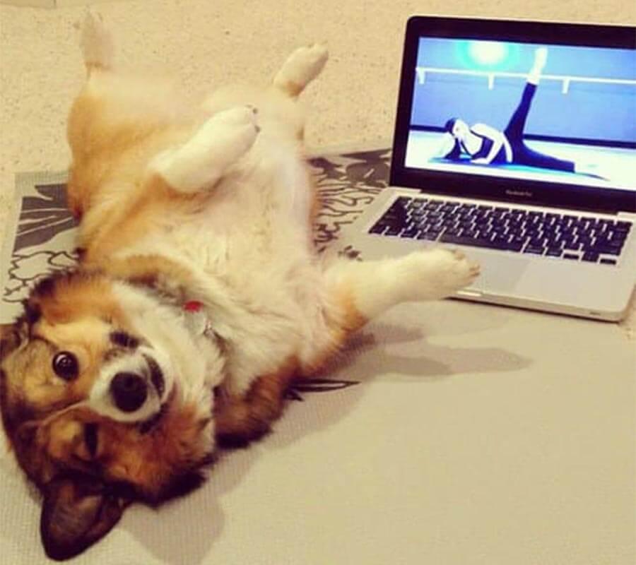 Dogs Humans 4.jpg