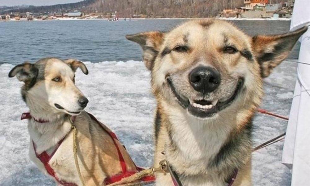 Dogs Humans 9.jpg