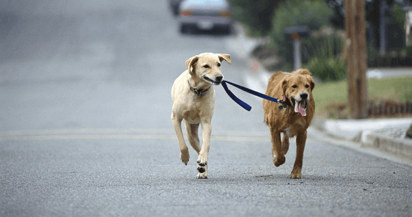 Dogs Walk Together.png