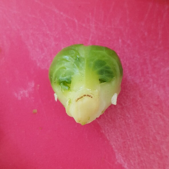 ET Brussell Sprout.jpg