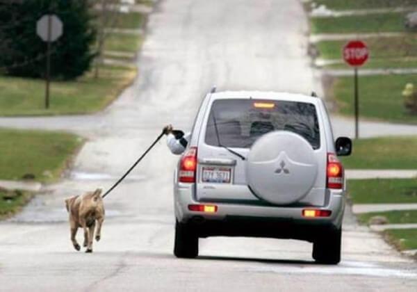 Lazy Way To Walk A Dog.jpg