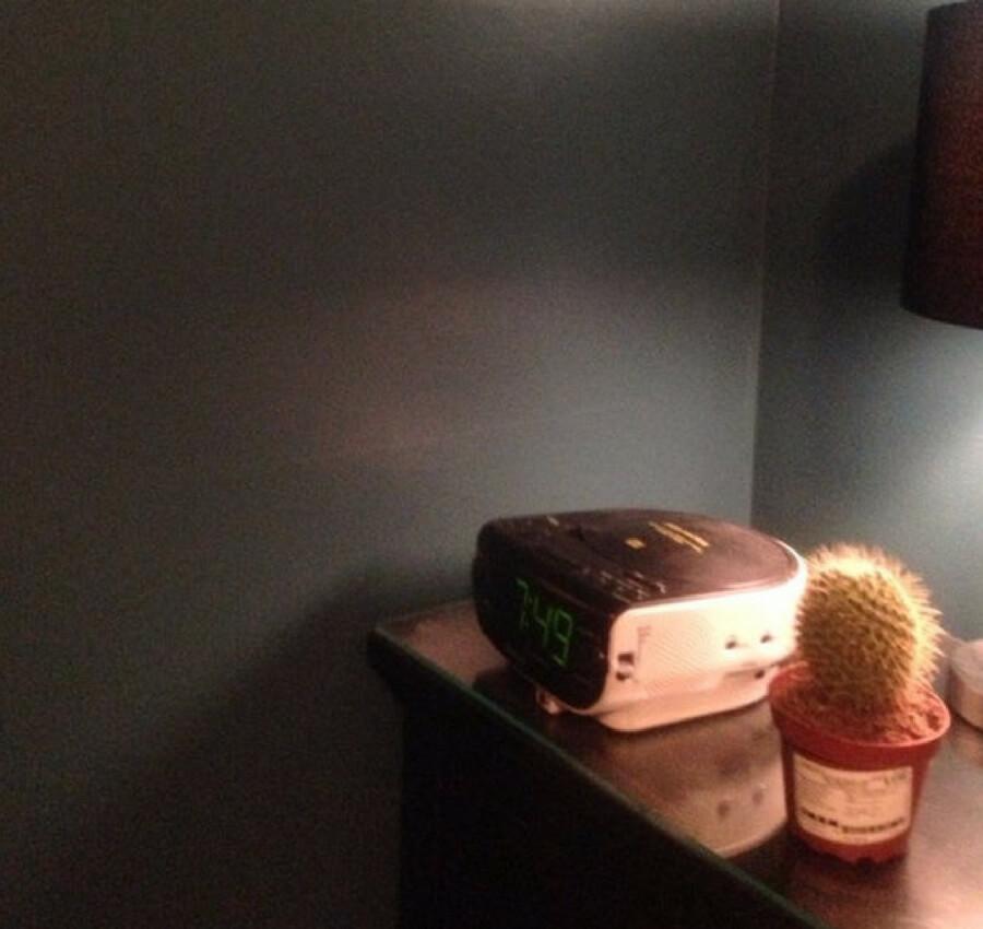 cactus snooze alarm.jpg