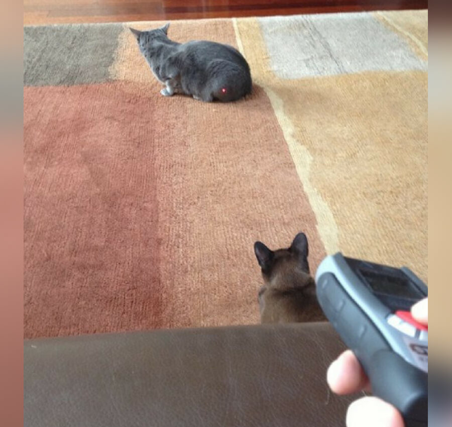 cat laser pointer.jpg