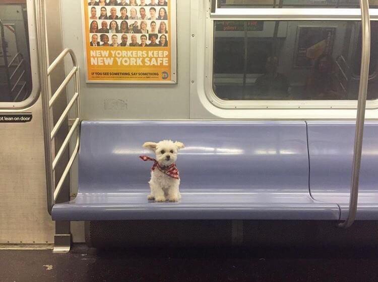 dog sitting on subway.jpg