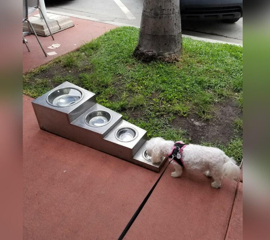 doggo bowls.jpg