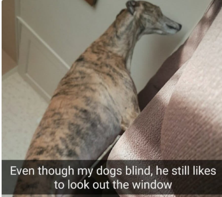 even though my dog is blind.jpg