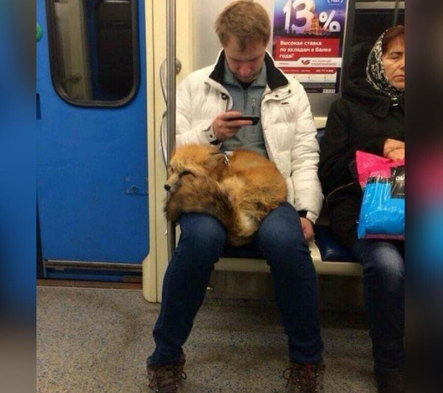 fox on lap.jpg