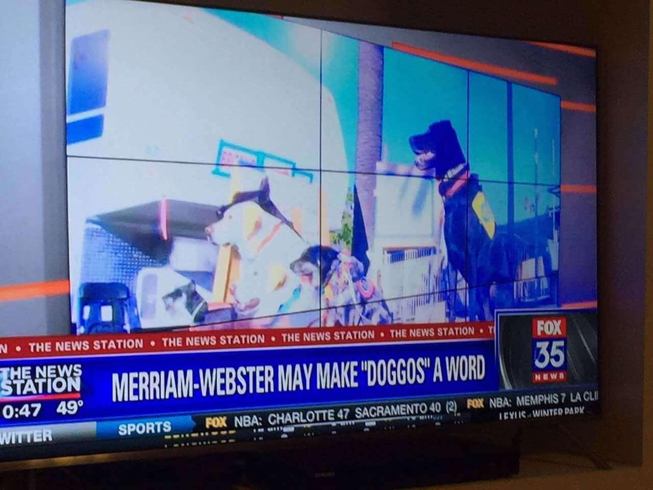 make doggo word.jpg