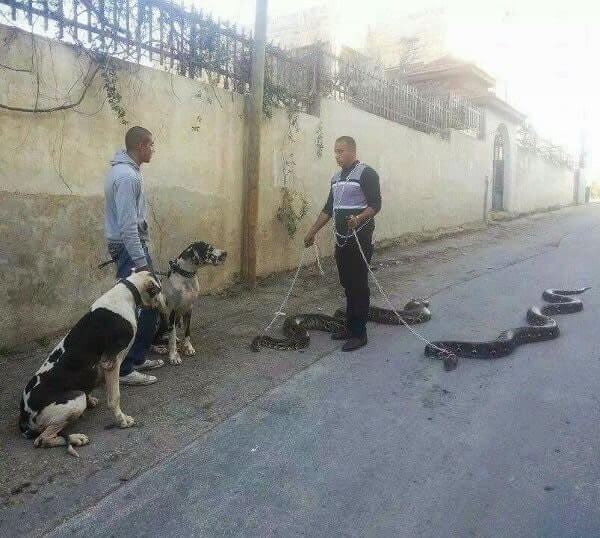 snakes on a leash.jpg