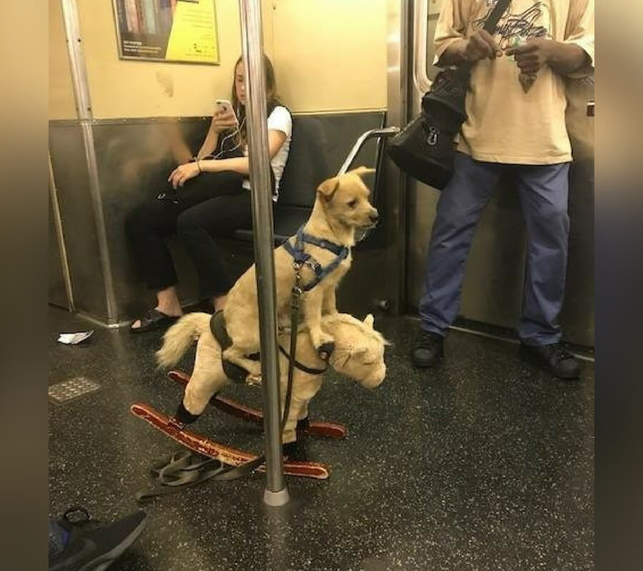 spotted on the subway.jpg
