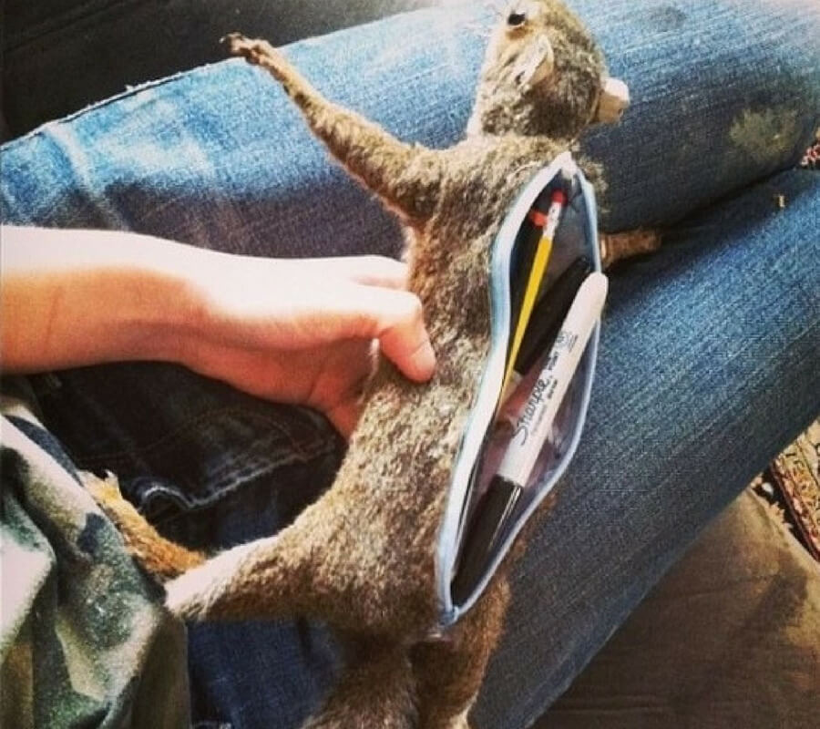 squirrel pencil case.jpg
