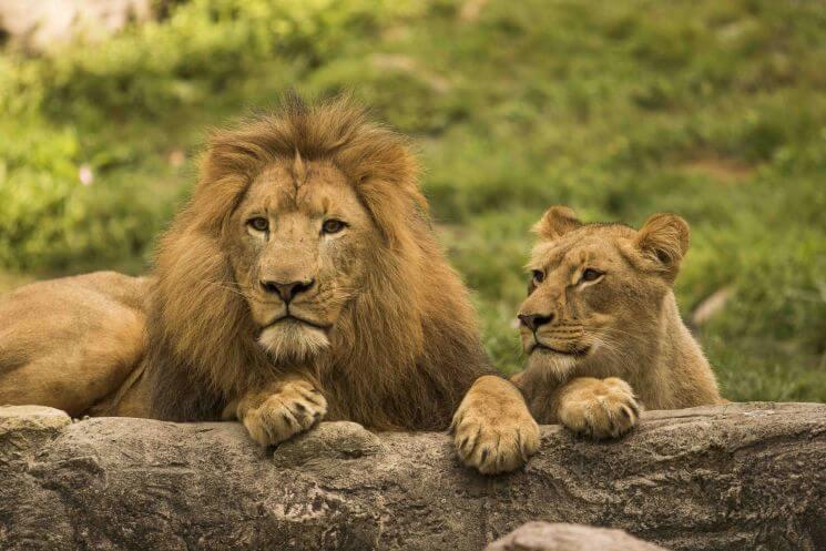 tampa-bay-lions.jpg
